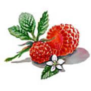 Artz Vitamins A Very Happy Raspberry Art Print