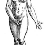 Vesalius: Female Nude Art Print