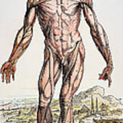 Vesalius: Muscles 01 Art Print