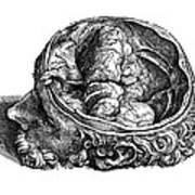Vesalius: Olfactory Organs Art Print