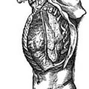 Vesalius: Thoracic Cavity Art Print