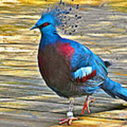 Victoria Crowned Pigeon In San Diego Zoo Safari In Escondido-california Art Print