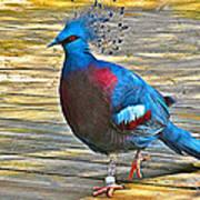 Victoria Crowned Pigeon In San Diego Zoo Safari In Escondido-california Art Print