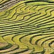 Vietnam Sapa Iv Art Print