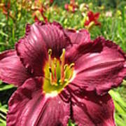 Viette's Daylily. Dark Purple 01 Art Print