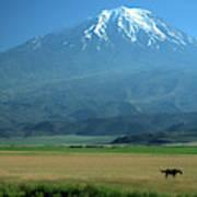 View Of Mount Ararat In Turkey Art Print