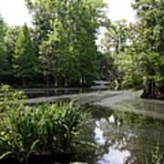 View Over Magnolia Plantation Lake Art Print