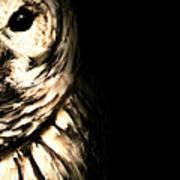 Vigilant In Darkness Art Print