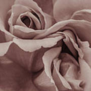 Vignette Rose. Art Print