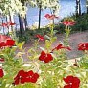 Vinca Lakeview Art Print
