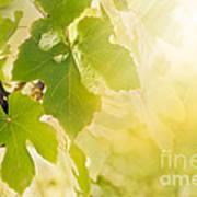 Vine Leaf Art Print