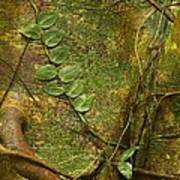 Vine On Tree Bark Art Print