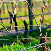 Vines On Wire 22637 Art Print
