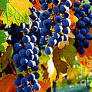Vineyard 2 Art Print