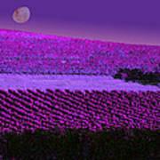 Vineyard 40 Art Print
