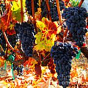 Vineyard 8 Art Print