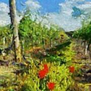 Vineyard And Poppies Art Print
