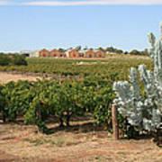 Vineyard And Winery Art Print