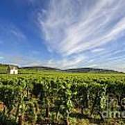 Vineyard Hut. Vineyard. Cote De Beaune. Burgundy. France. Europe Art Print