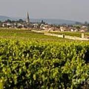 Vineyard In Front Of The Village Of Meursault. Burgundy Wine Road. Cote D'or.burgundy. France. Europ Print by Bernard Jaubert