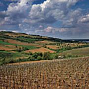 Vineyard In Frushka Gora. Serbia Art Print