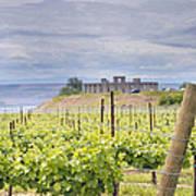 Vineyard In Maryhill Washington State Art Print