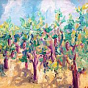 Vineyard In The Afternoon Sun Art Print