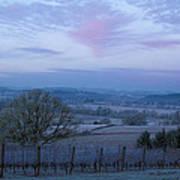 Vineyard Morning Light Print by Jean Noren