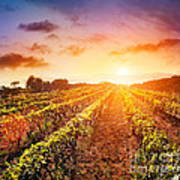 Vineyard Print by Mythja  Photography