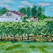 Vineyard Of Ontario 2 Art Print
