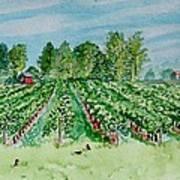 Vineyard Of Ontario Canada 1 Art Print