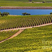 Vineyard On A Lake Art Print
