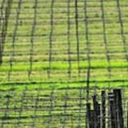 Vineyard Poles 23051 2 Art Print