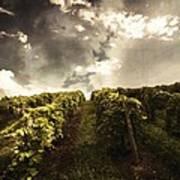 Vineyard Wanderlust Art Print