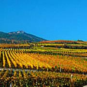 Vineyards In Autumn, Valais Canton Art Print