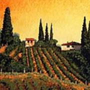 Vineyards Of Tuscany Art Print