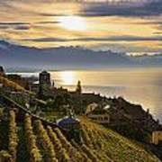 Vineyards Saint-saphorin, Lavaux Art Print