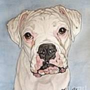 Vinnie The White Boxer Art Print