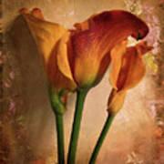 Vintage Calla Lily Art Print by Jessica Jenney
