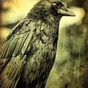 Vintage Crow Art Print