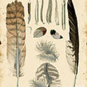 Vintage Feather Study-a Art Print