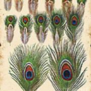 Vintage Feather Study-jp2084 Art Print