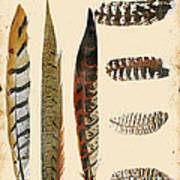 Vintage Feather Study-jp2085 Art Print