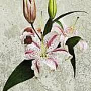 Vintage Flowers Art Print by Lesley Rigg