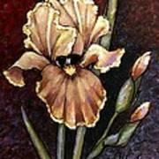 Vintage Iris Art Print