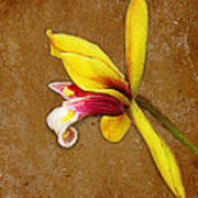 Vintage Orchid Art Print