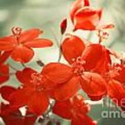 Vintage Red Flowers Art Print