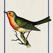 Vintage Robin Vertical Art Print
