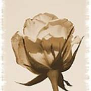 Vintage Rose 2013 Art Print