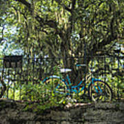 Vintage Schwinn And Ancient Live Oak Art Print